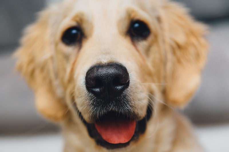 Rifugio cani randagi